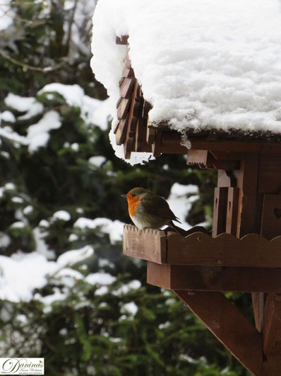Unerschrockenes Rotkehlchen ruht sich gerne mal am Vogelhaus aus. By Daninas-Kunst-Werkstatt.at