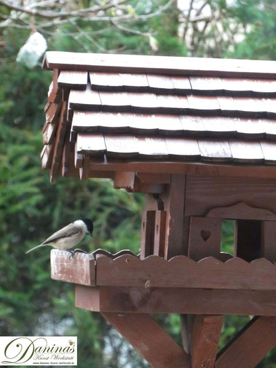 Hübsche Sumpfmeise (oder Weidenmeise) gibt sich die Ehre am Vogelhäuschen by Daninas-Kunst-Werkstatt.at