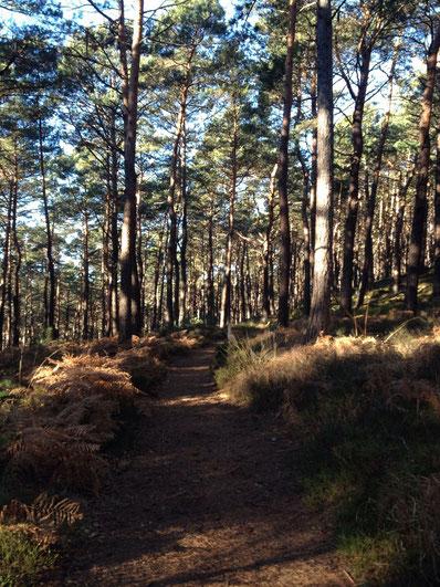 Weingut Deck. Maikammer. Pfalz: Wandern im Pfälzer Wald