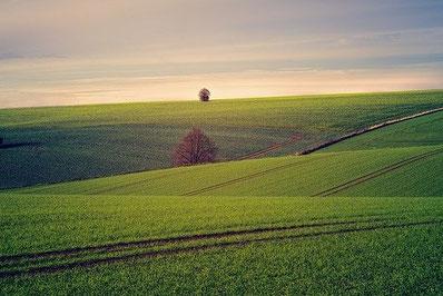 ausgeräumte Landschaft