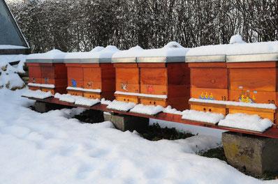 Honigbienenvölker im Winter