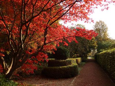 Achtsamer Herbstspaziergang