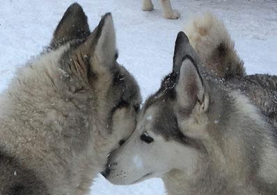 Zwei die sich lieben (Yukon und Nele)