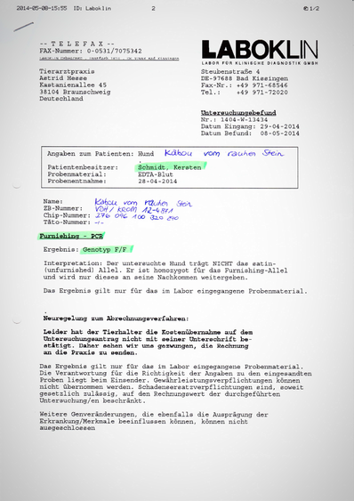 Kabous Laboklin-Testergebnis: Furnishing - Genotyp F/F (reinerbig rau)