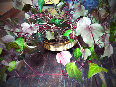 またイイ感じの見つけたので、植物を入れてみた、。 少し植物が大きいかな?