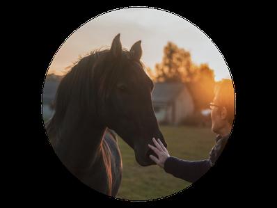 Pferdegestütztes Coaching für Unternehmen – Osteopathie Lisa Kullmann Hamburg