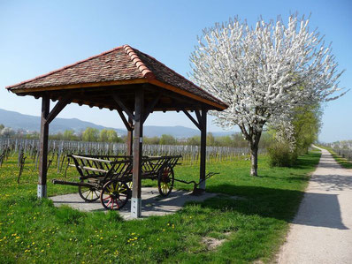 Nicht nur im Frühjahr zur Baumblüte zeigt sich der Kirrweiler Bibelpfad in seiner vollen Pracht.