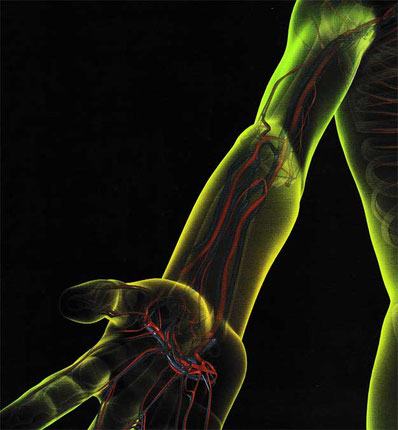 Speichenarterie | Arteria radialis