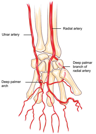 Anatomie der Handarterien