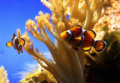 Da lacht die Koralle