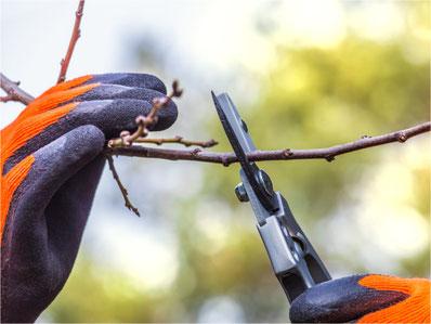 Jetzt ist es Zeit für den Winterschnitt bei Bäumen und Sträuchern. Bild: zvg