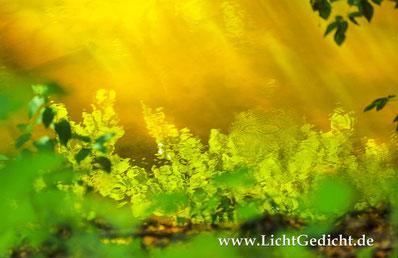 Bild 13: Farbenspiele in einem Waldbach, Nikon F 100, Nikkor 2.8/80-200mm, Kodak Elite Chrome 100 Extra Colour