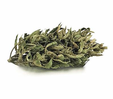 LisonWeed - Cannabis Light
