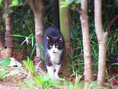 横浜で出会った猫。も、日々冒険とチャレンジですね…きっと…。仲間という感じがして(勝手に…)なんだか嬉しい…♪