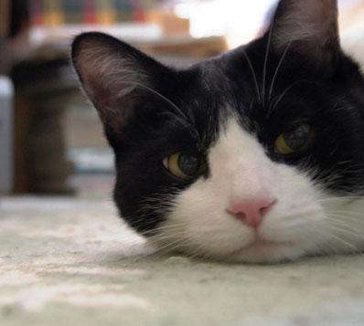 うっしーさんの猫ちゃん 可愛い~