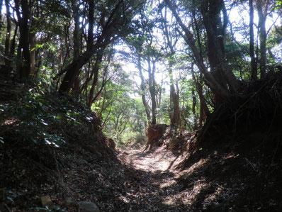 伊豆山神社 鎮守の森