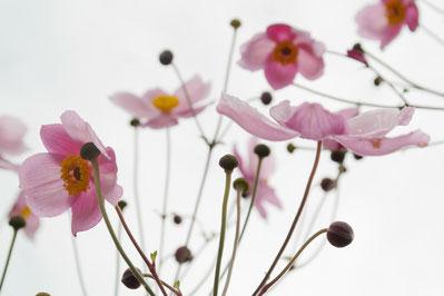 Comment faire entrer le printemps dans son intérieur