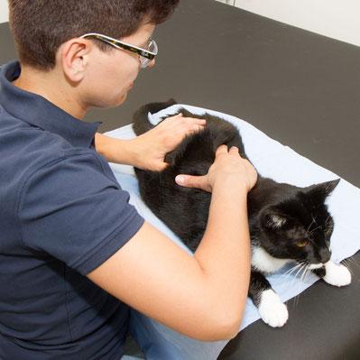 Manuelle Therapie bei der Katze