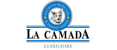 Les nouveaux colliers martingale, achat solidaire pour le refuge de la Camada, Lévriers et Compagnie  Image