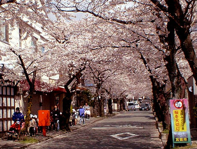 桜並木通り(市道・才が原線)