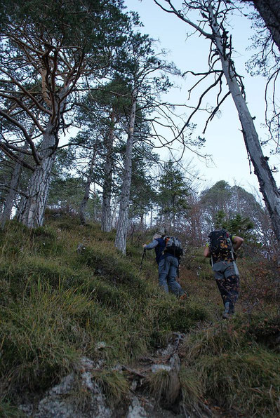 Im steilen Waldabschnitt