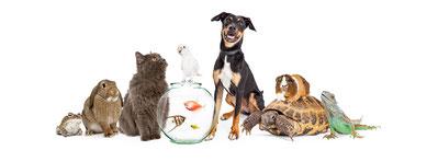 Tierheilung - Tier und Mensch im Einklang