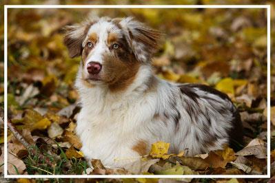 Tierfotograf-Juergen-Sedlmayr-Hund