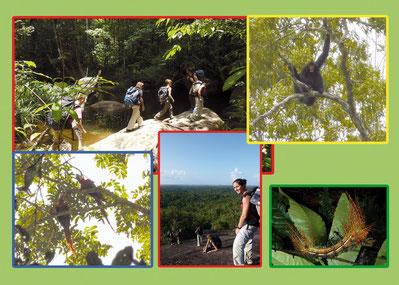 découverte de la nature en guyane avec un guide naturaliste