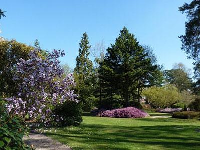 Magnolia et bruyères à l'Arboretum des Grandes Bruyères