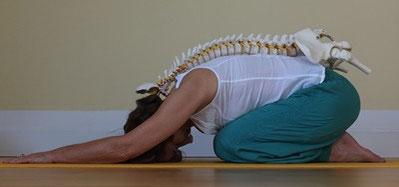Yogatherapie Seminare für Yogalehrende in Hamburg