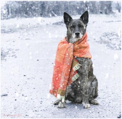 Dido showt de nieuwste wintersporttrend