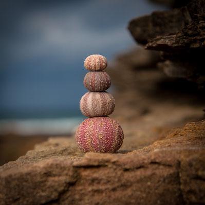 Turm aus vier übereinandergestapelten runden Korallenhüllen auf steinigem Untergrund