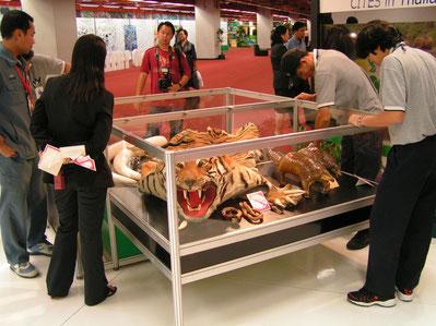 Konfiszierte Exemplare der CITES-Vollzugsbehörde Thailands (CoP13, Bankok)