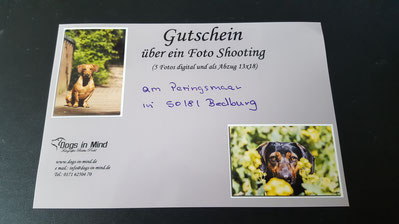 Fotoshooting bei Dogs in Mind, Foto: Oetken