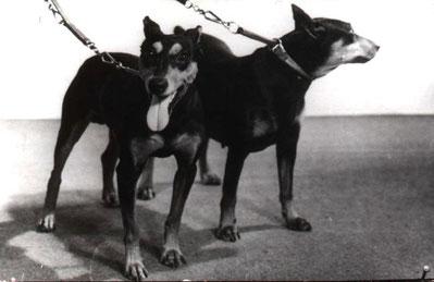 links: Marlo von der Birkenheide; rechts: Uschi von der Sidonienhöhe