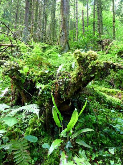 Jardins sauvages dans les Pyrénées