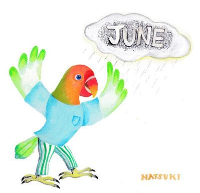 6月 インコ