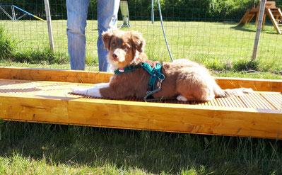 Die Trainingsplätze vom Hundefreilauf Stade