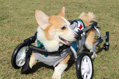 犬の車椅子 犬用車椅子 犬の車いす 犬用車いす 犬 車椅子