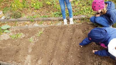 Schüler pflanzen Krokusse & Co.