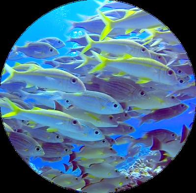 Fish wall of Bora Bora