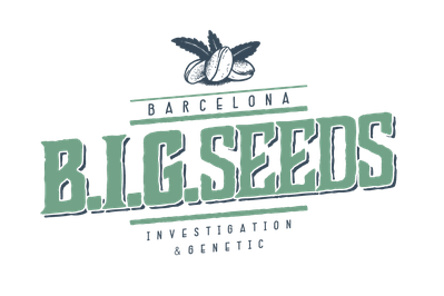 bigseeds, big seeds barcelona investigation & genetic