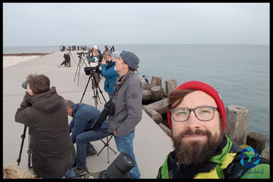 Birder and twitcher on Heligoland