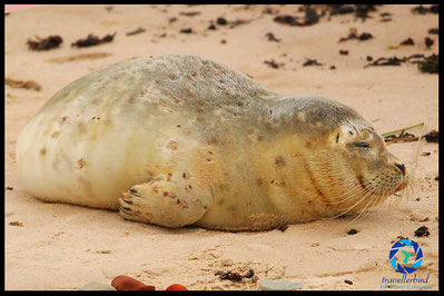Young seal on the beach