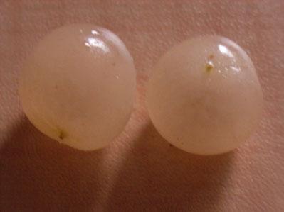 直径1.5センチほど。真珠のような果実です。なかにさくらんぼうに似た種があります。
