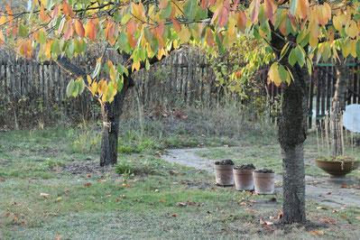 Herbstlicher Garten Vögel im eigenen Garten NABU Düren