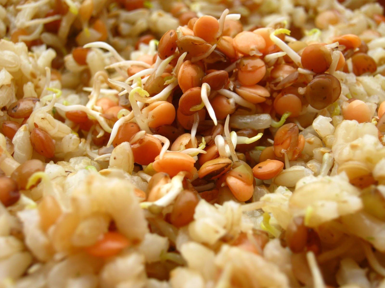 Riso integrale con germogli di lenticchie sempreverde biogermogli - Cucinare riso integrale ...