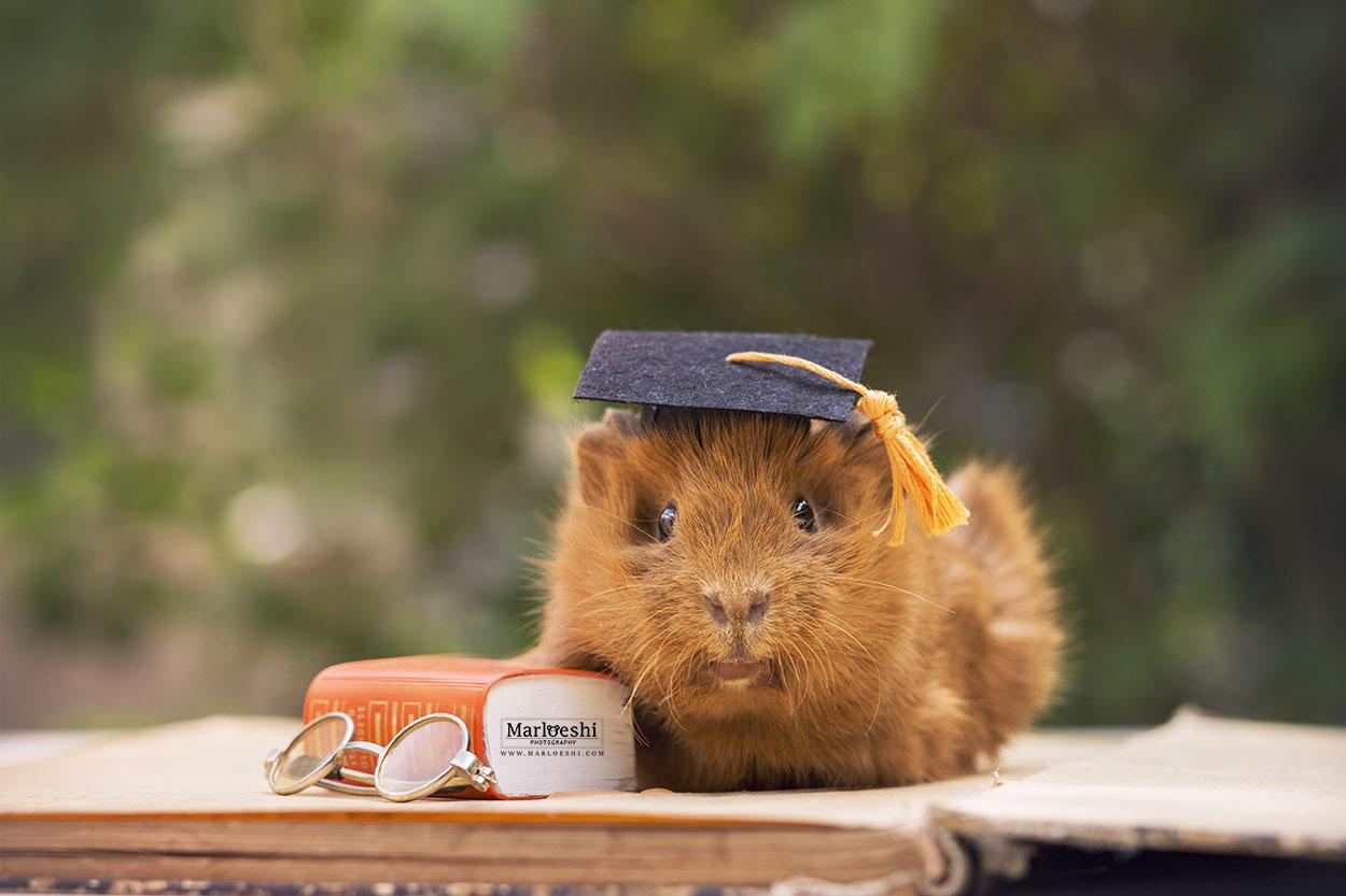 Ferret Graduation Hat Tiny Graduation Cap for Bearded Dragon Guinea Pig Graduation Hat