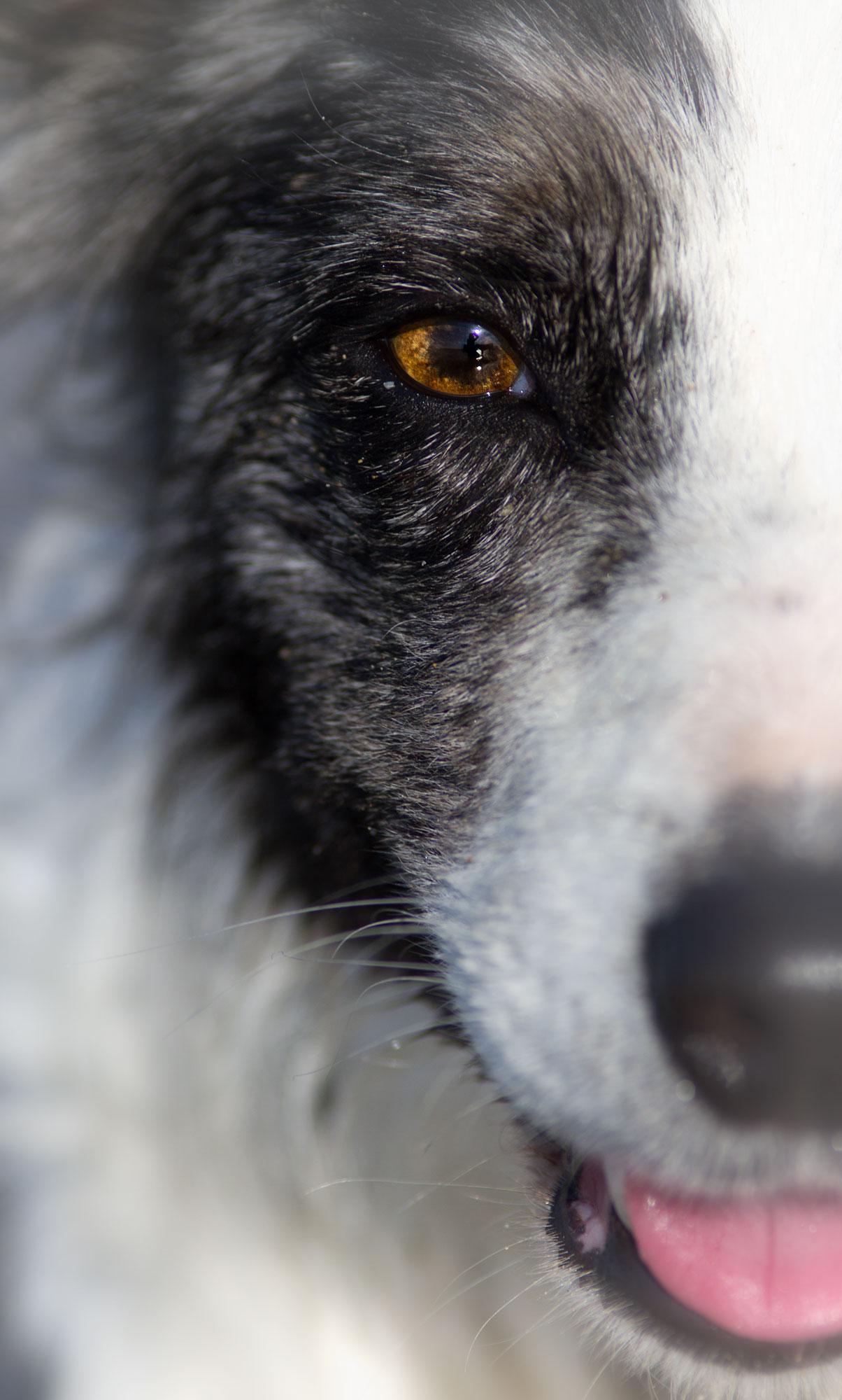 apropos chiennormandie urlaub mit hund in der normandie. Black Bedroom Furniture Sets. Home Design Ideas