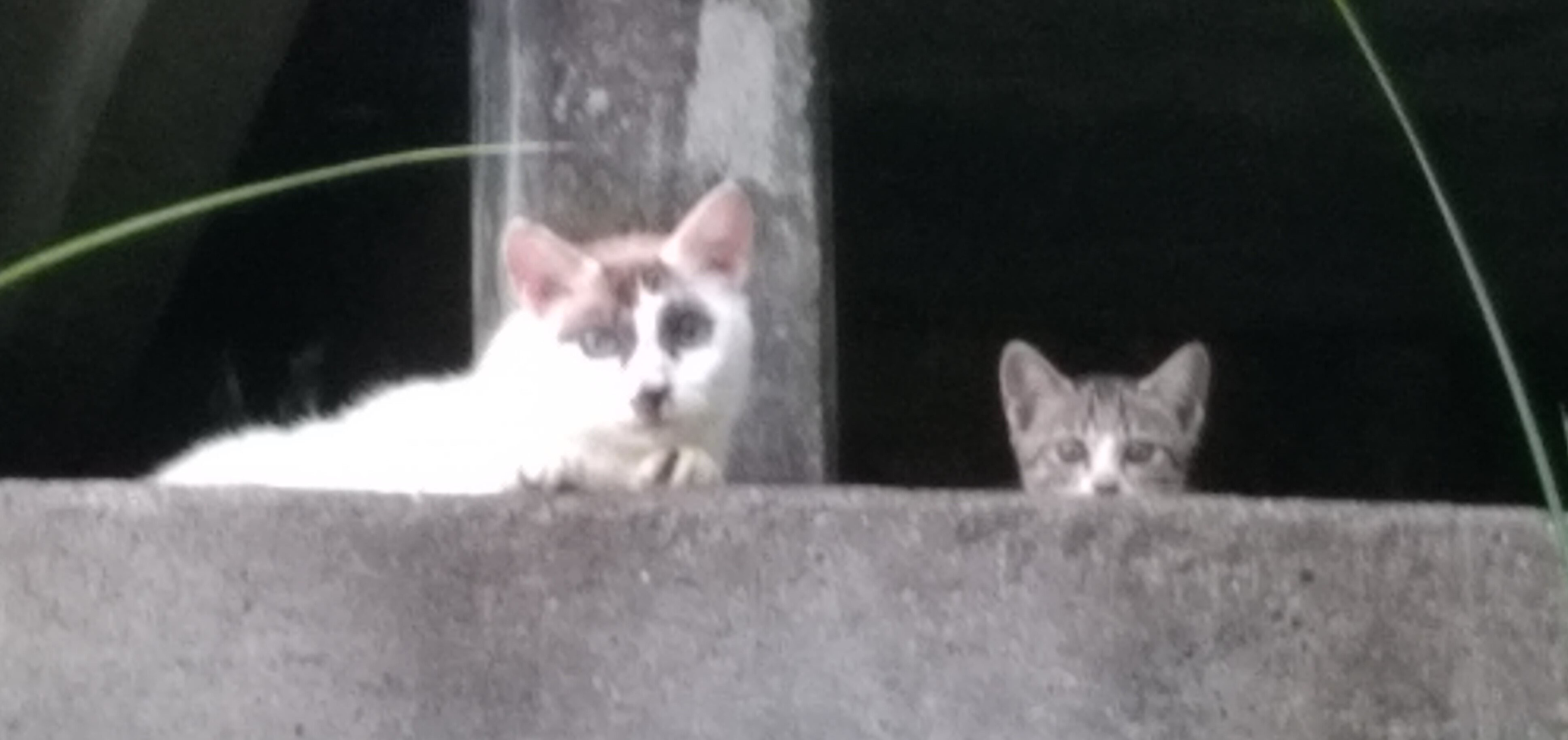 度会町の猫・29 - ani-tora ページ!